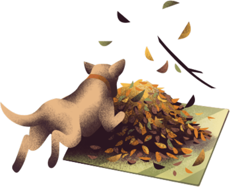 An image of a dog jumping into a pile of leaves